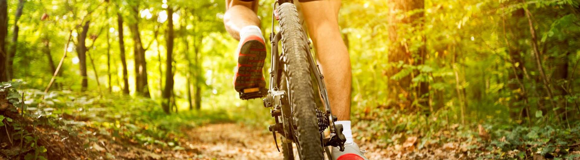 Cycling & mountain biking   Thermen & Sporthotel Gutenbrunn